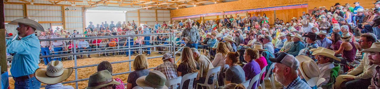 Jake Clark, Mule Days, auction